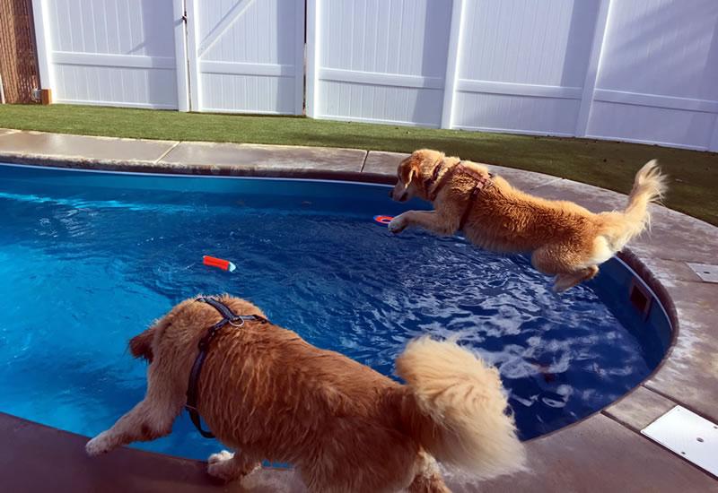 Dog Swimming Pool   Bone Voyage Pet Resort   Garner NC